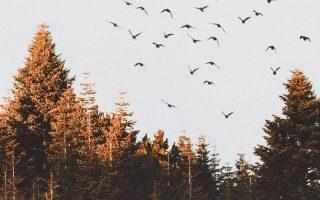 15 Herbst iPhone XS Hintergründe - Beste Herbst Hintergründe