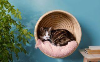 Katzenkorb | Dieser Luftbarsch hebt nicht nur das Bett Ihrer Katze vom Boden auf. es ermutigt sie, zu springen, zu kratzen und die lebenden ...