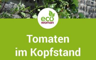 Anleitung: Tomaten pflanzen leicht gemacht