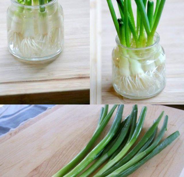 12 besten Gemüse & Kräuter zum Nachwachsen aus Küchenabfällen