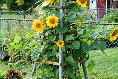 24 einfache DIY Gartengitter Ideen & Pflanzenstrukturen - Ein Stück Regenbogen