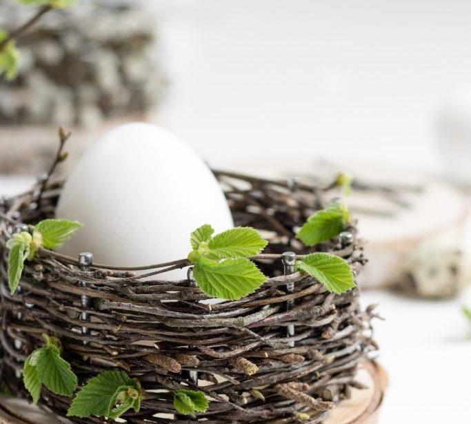Osterkörbchen flechten mit Baumscheiben | ZWO: STE