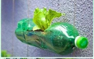 DIY Plastikflasche Garten Projekte & Ideen [Picture Instructions]