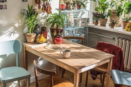 10 Zimmerpflanzenliebhaber folgen auf Instagram - Gardenista - Beata und Remek ... - 10 ...