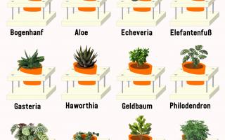 Plantura - fordertiges Gärtnern für alle