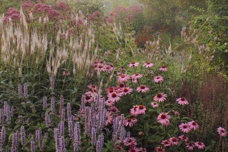 Tom-Wie diese Pflanzen, aber sie sollten gereinigt werden - Agastache, Echinacea, Sedum und ich… - Modern
