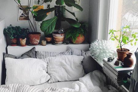 """SEBASTIAN auf Instagram: """"Morrn! Idag lyser solen ☀️🙌🏼🌱 Både jag o växterna har langenat så! 🙈☘️ """""""